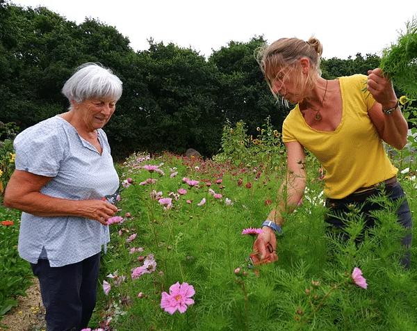Production de fleurs coupées à Pont l'Abbé